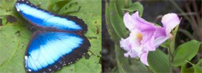 Butterfly%20Pic